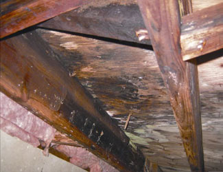 mold and rot in a Sierra Vista crawl space